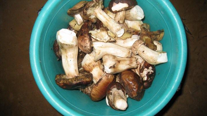 Как чистить белые грибы в домашних условиях