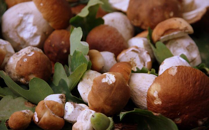 Белые грибы для маринада