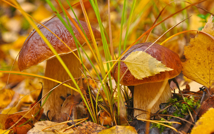Белый гриб осенью в лесу